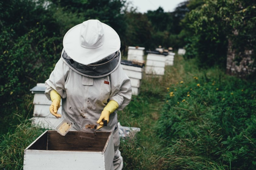 Femle Beekeeper in Gear working a hive - Photo by Annie Spratt on Unsplash
