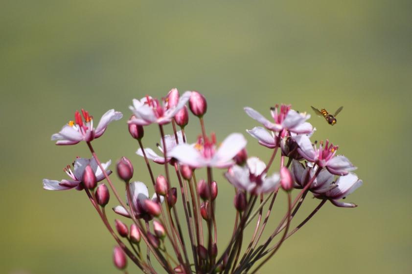 nectar-raid_full